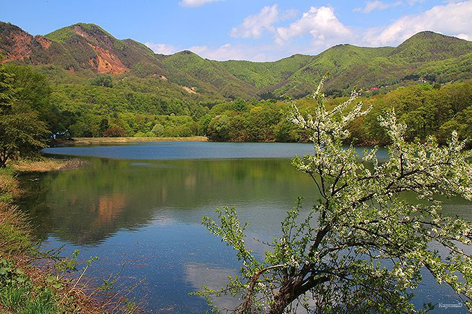 水芭蕉の群生地もある鴫の谷地沼