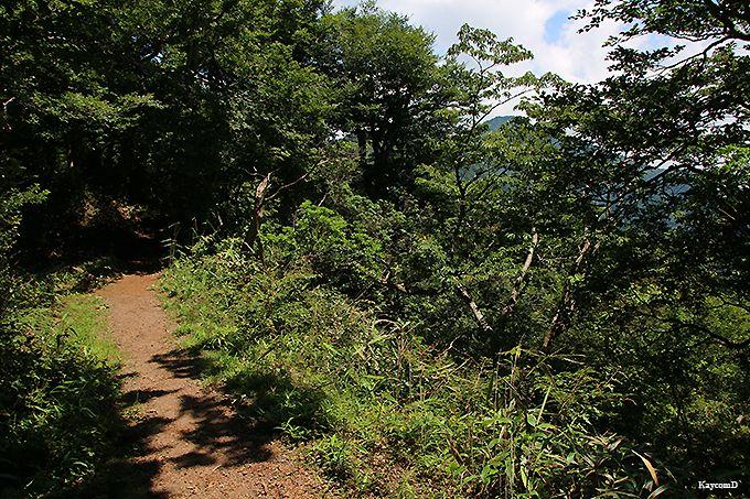 乙女峠から丸岳山頂