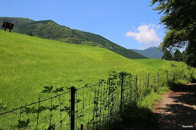 長尾峠から仙石原