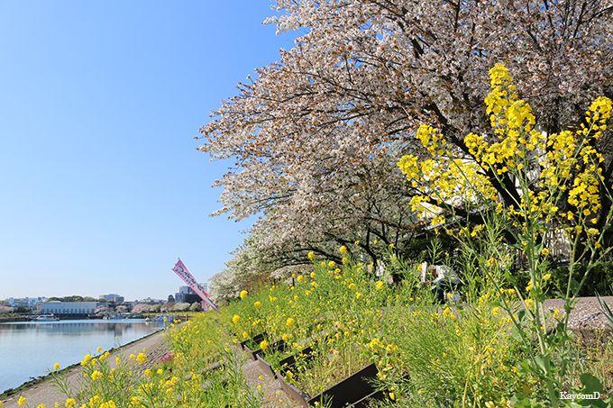 立会川駅から「しながわ花街道」へ