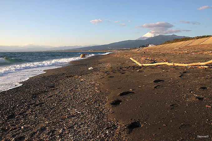 広大な砂浜が続く沼津の景勝地「千本浜公園」