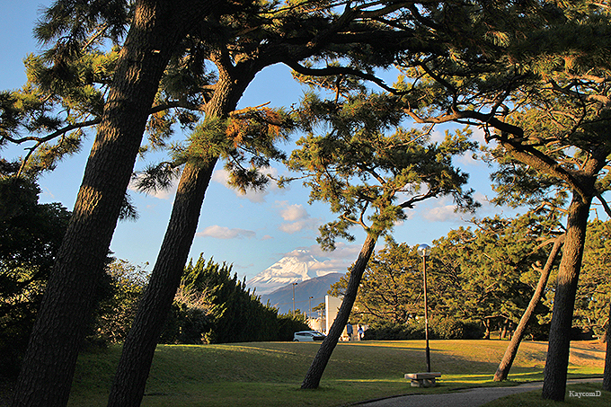 松林と富士山が美しい「港口公園」