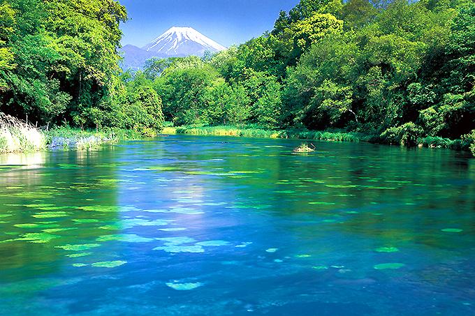 日本一の湧水量「柿田川湧水群」