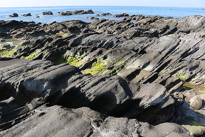 三浦半島の希少な自然海岸が残る「天神島臨海自然教育園」