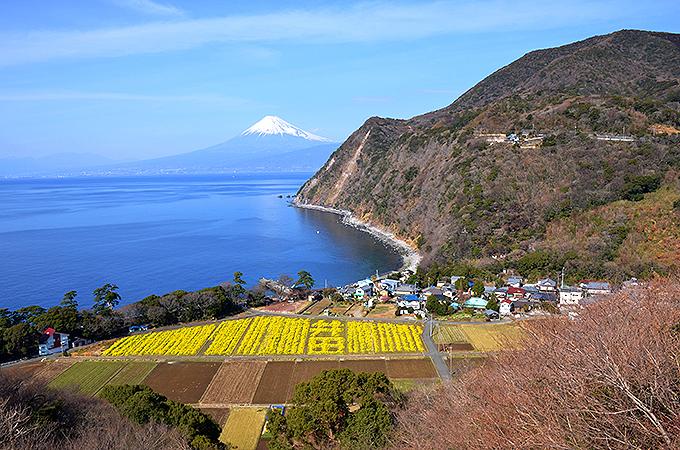 井田と言えばこの絶景「煌めきの丘」
