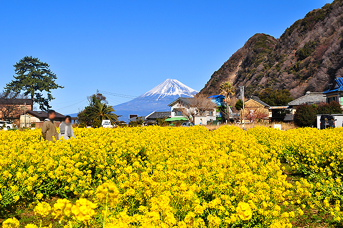 西伊豆井田で昔話の世界へ!井田ブルーの海と絶景で癒されよう