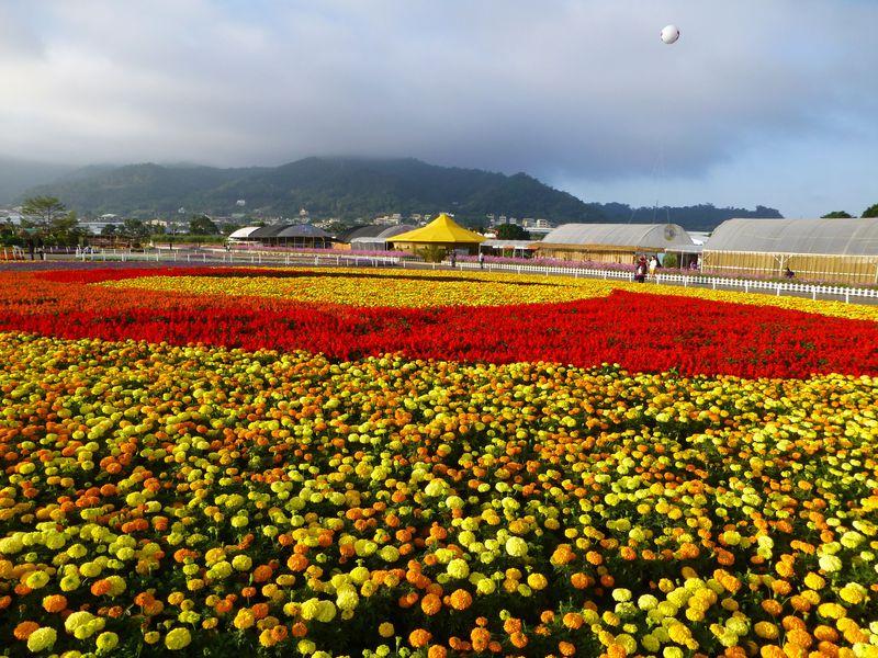 台湾台中「新社花海2019」は山奥に広がる一面の花畑!