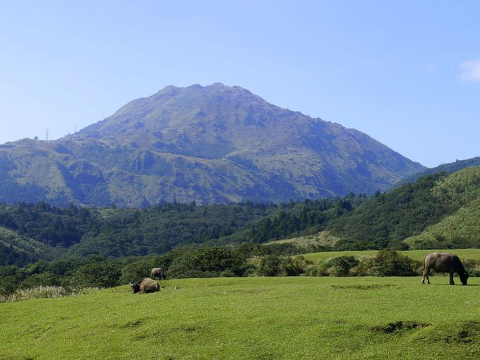 大草原に野生の牛!「チン天崗草原景観区」