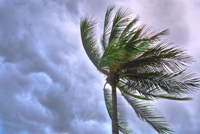 台湾の台風について