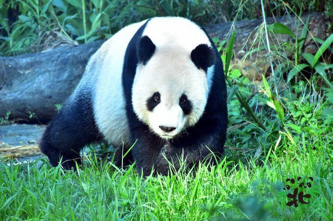 台北市立動物園のパンダの観覧方法は?