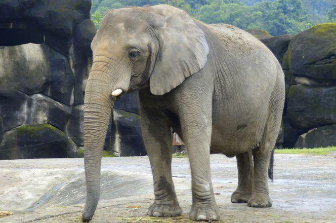 ゾウやキリンなどの人気の動物はもちろん!台湾固有動物も見逃せない