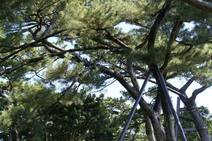 松の木にぐるりと囲まれ花蓮の海を見渡す憩いの場に