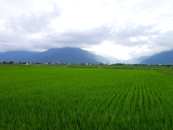 台湾の米どころ・台東県池上の「池上郷農會直銷驛站」