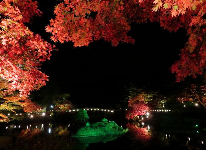 幻想的な美しさ!虹の郷の「もみじライトアップ」