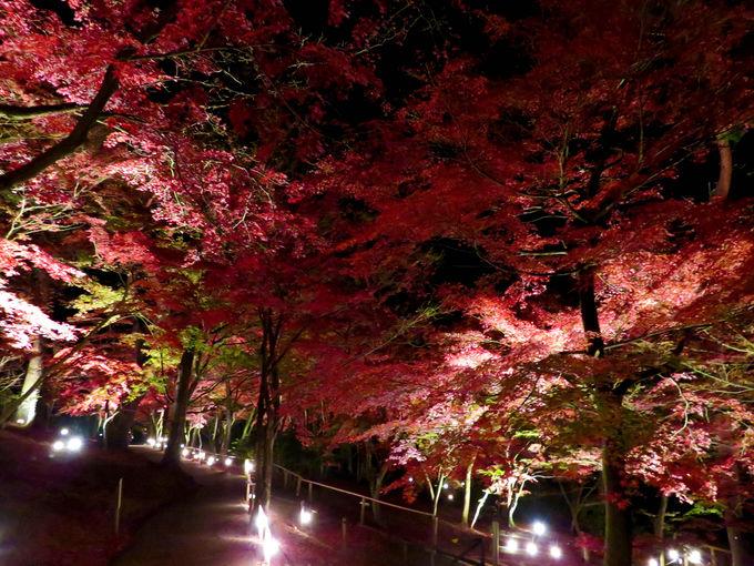 漆黒の中、鮮やかに輝く「匠の村 もみじ林」
