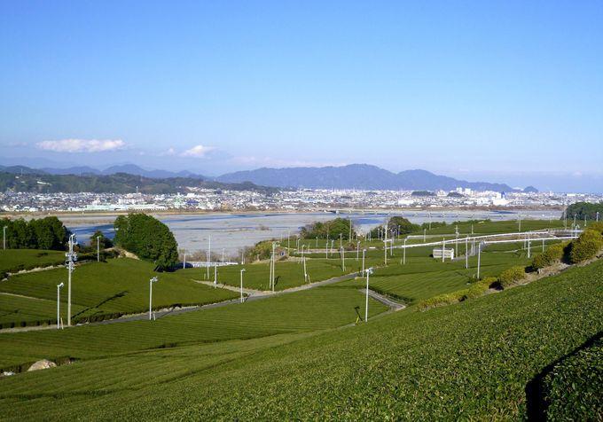 島田きっての名所、蓬莱橋とは!