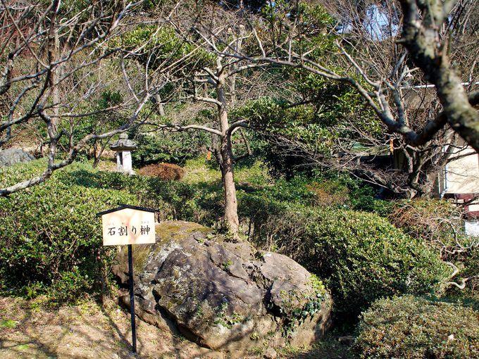 一番の絶景は「香浮橋」周辺!「梅園六名木」にも注目