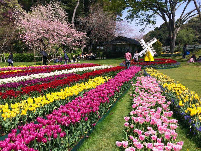園内は美しさ満載!楽しみながら一周しよう