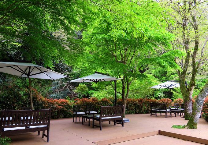 緑豊かなガーデン、ピクニックもお薦め!