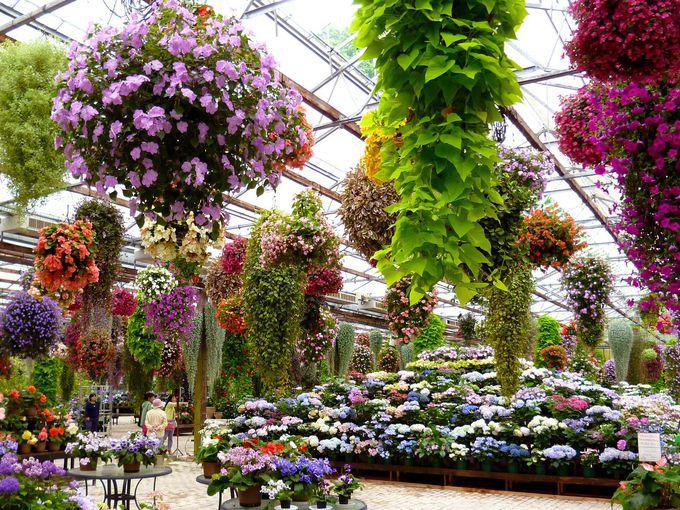 展示温室でたくさんの花に囲まれよう!