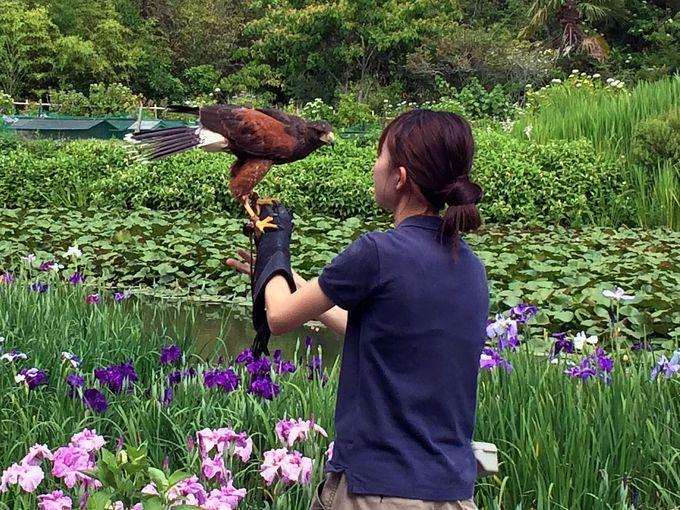 鳥達とのふれあいも大きな魅力!