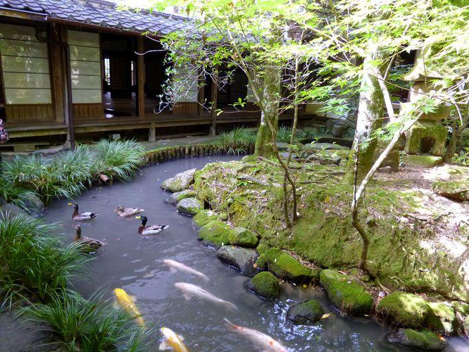 5.加茂荘花鳥園