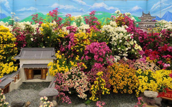 小田原城は花の名所!NINJA館に常盤木門SAMURAI館も