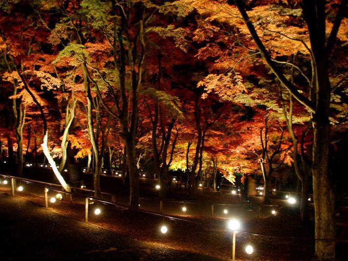 漆黒の中、鮮やかに輝く「匠の村」のもみじ林