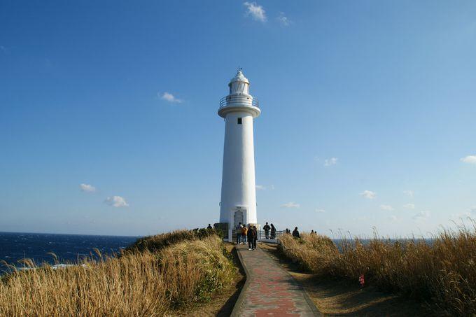 海と水仙とアロエの絶景が楽しめる観光地「下田爪木崎」