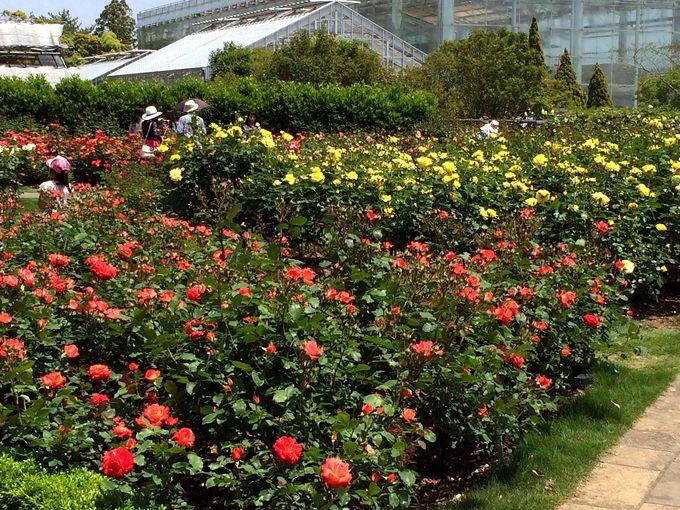 四季折々の花も要チェック!散策を楽しむポイント