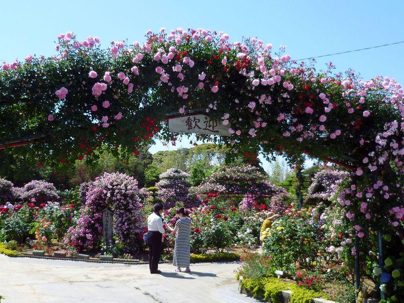 浜松・隠れたバラの名園「ばらの都苑」!私設を超えるスケールにビックリ仰天!