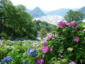 伊豆「下田公園」・株数日本一!「あじさい祭」と港を臨む絶景を楽しもう