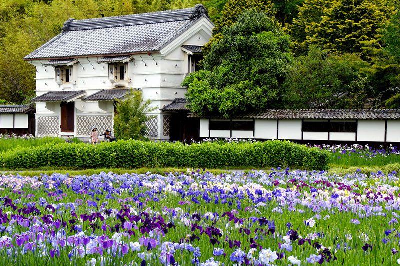 花と鳥と歴史ある庄屋屋敷で癒されよう!掛川市「加茂荘花鳥園(加茂花菖蒲園)」
