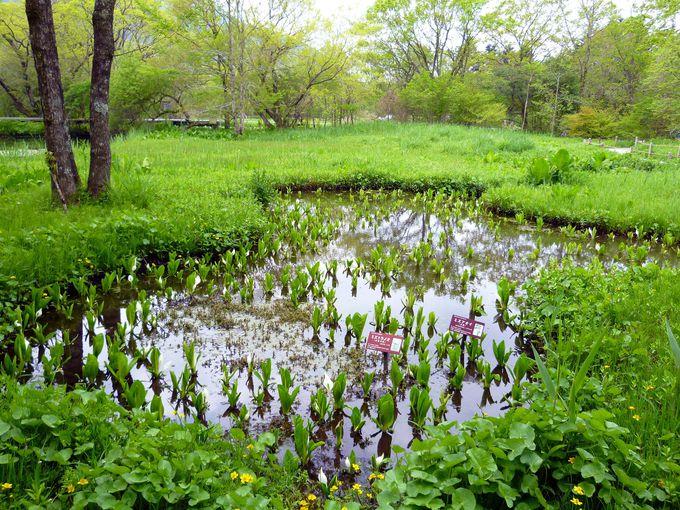 爽やかな仙石原にある、日本最初の湿原植物園!