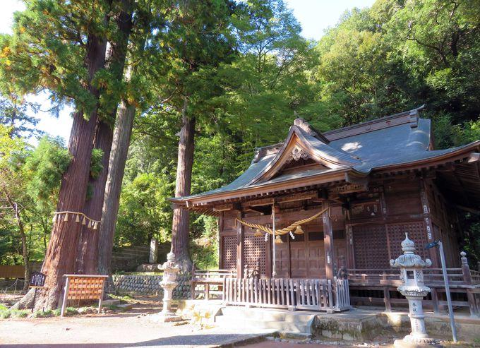 子授けのパワースポット!木のパワーがいっぱい「日枝神社」