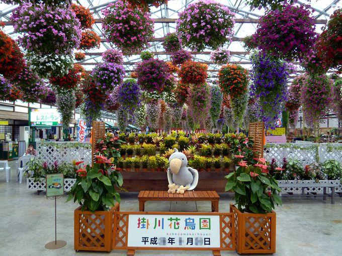 「花と鳥とのふれあい」が楽しめる癒しの空間!