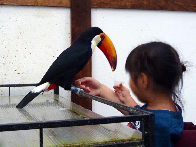 びっくりするけど可愛い!人気の鳥達をご紹介