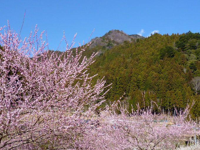 風光明媚な奥三河で花巡り!