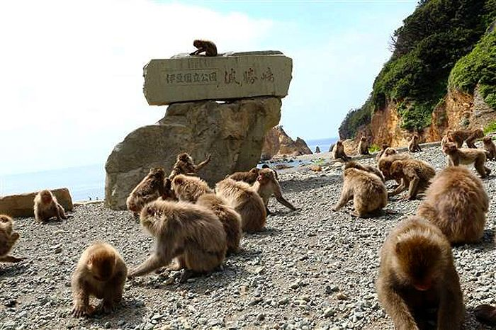 野生の猿と親しめる「波勝崎苑」!