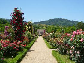 ここは18世紀フランス!?春の伊豆「河津バガテル公園」はバラと名園が凄い