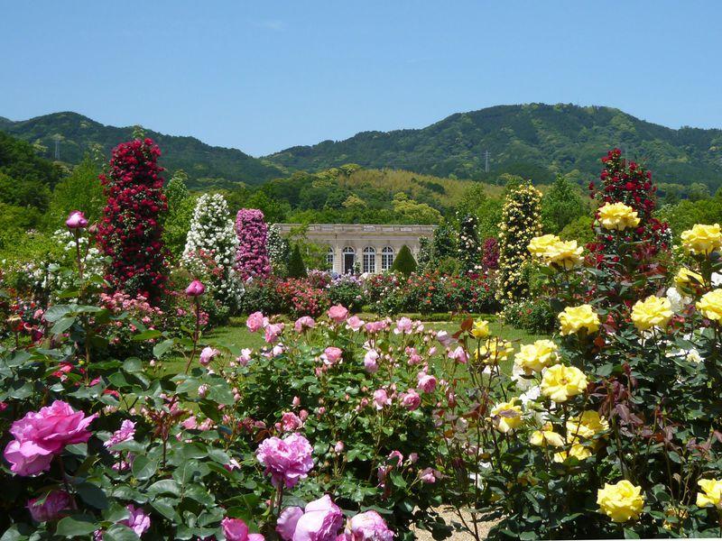 伊豆「河津バガテル公園」約6000株のバラが咲くフランス式庭園を堪能!