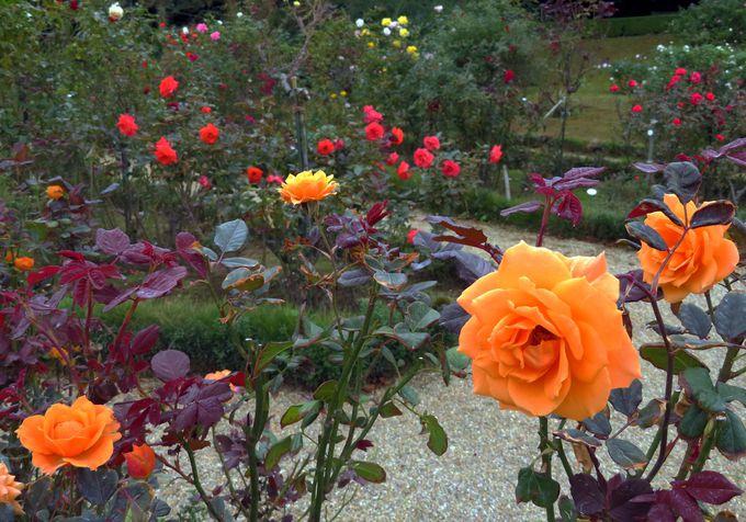 「ローズガーデン」の見頃は春と秋!