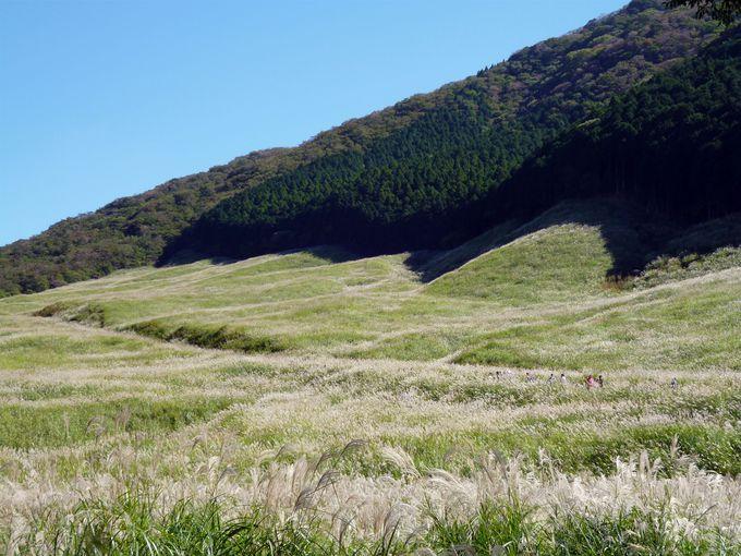 関東一の規模!秋の箱根で必ず訪れたい「仙石原すすき草原」