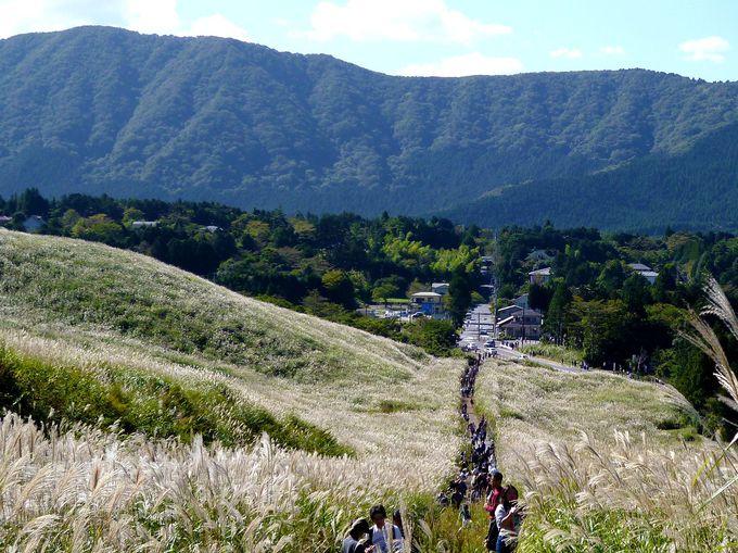 すすき草原の美しさをたっぷり楽しもう!