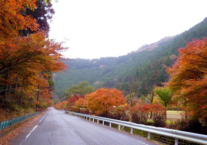 道中は、大井川鐡道のSLでワクワク!