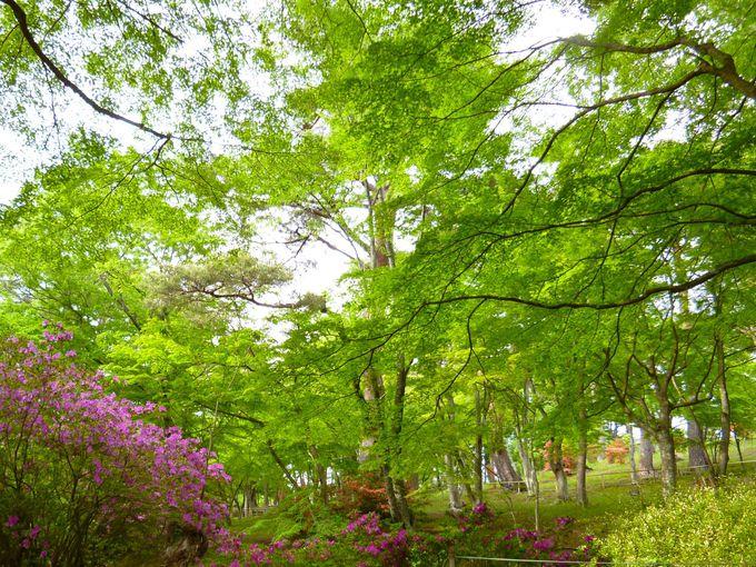新緑のもみじも美しい!花のリレーはまだまだ続く!