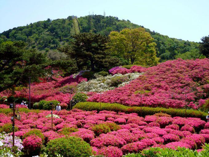 絶景・花の名所・ハイキング!小室山公園の楽しみ方