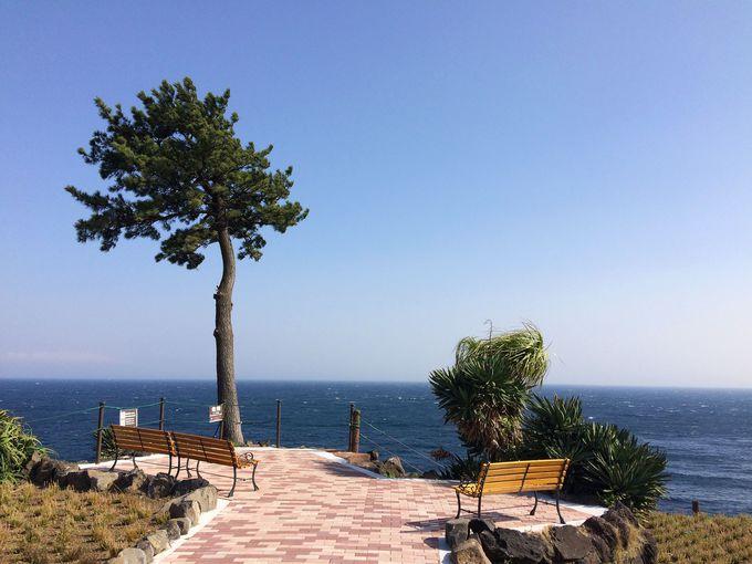 城ヶ崎海岸随一の絶景と花畑のコラボ!