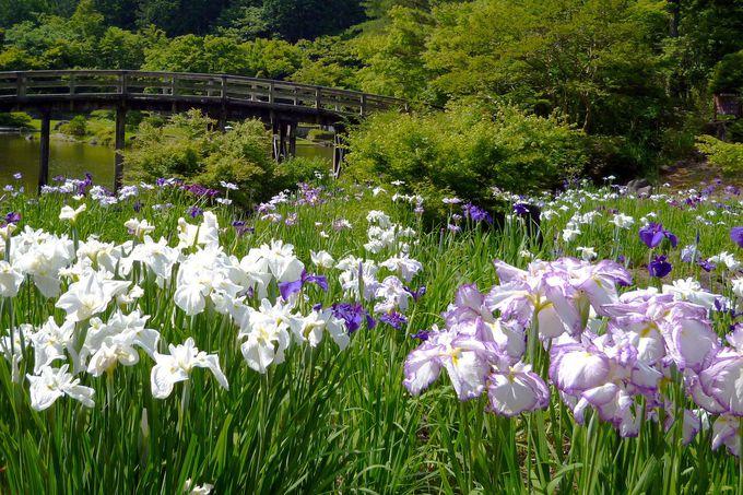 5月下旬〜6月中旬は「花しょうぶ園」へGO!