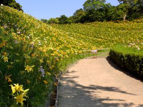 ユリの絶景がすごい!袋井市「可睡ゆりの園」世界150余品種の競演